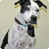 Adopt A Pet :: Sadie - Port Washington, NY