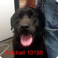 Adopt A Pet :: Mitchell - Greencastle, NC