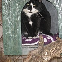 Adopt A Pet :: Bob - Coos Bay, OR