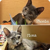 Adopt A Pet :: Phoebe & Fiona - Foothill Ranch, CA