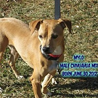 Adopt A Pet :: Mylo - Huddleston, VA