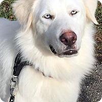 Adopt A Pet :: Crystal in PA - Beacon, NY