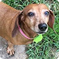 Adopt A Pet :: Lexie Romesco - Houston, TX