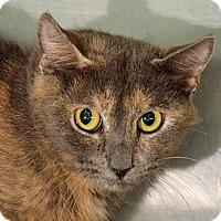 Adopt A Pet :: 10310414 - Brooksville, FL