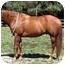 Photo 2 - Quarterhorse/Other/Unknown Mix for adoption in Washington, Connecticut - Charlie