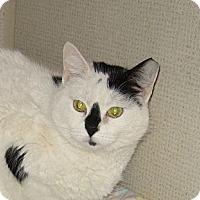 Adopt A Pet :: ALLIE - 2014 - Hamilton, NJ