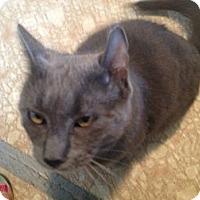 Adopt A Pet :: Brady - Binghamton, NY