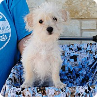 Adopt A Pet :: Hannity - Weatherford, TX