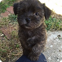 Adopt A Pet :: Fifi-Pending Adoption - Omaha, NE