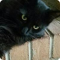 Adopt A Pet :: Hunter - Columbus, OH