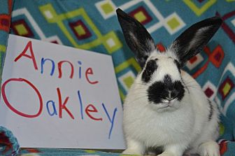 American for adoption in Erie, Pennsylvania - Annie Oakley