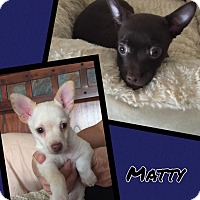 Adopt A Pet :: Andy - Scottsdale, AZ