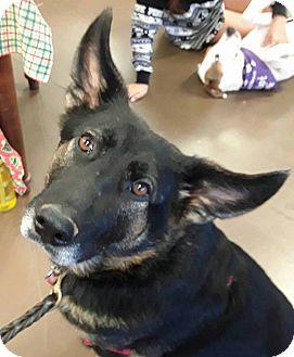 German Shepherd Dog Mix Dog for adoption in CUMMING, Georgia - Jessie