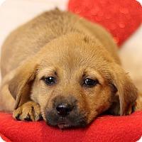 Adopt A Pet :: Georgia - Waldorf, MD