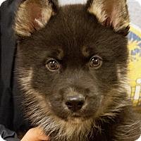 Adopt A Pet :: Leo - Patterson, CA