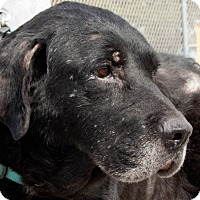 Adopt A Pet :: Maggie - San Antonio, TX