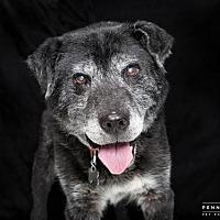 Adopt A Pet :: DEACON - Nashville, TN