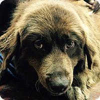 Adopt A Pet :: Louie - Mount Holly, NJ