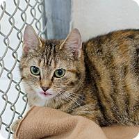 Adopt A Pet :: Norma - Greenwood, SC