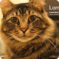 Adopt A Pet :: Larry - Pensacola, FL
