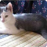 Adopt A Pet :: Margot - New York, NY