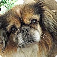 Adopt A Pet :: Prissie-VA - Suffolk, VA