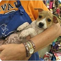 Adopt A Pet :: Bubba - The Colony, TX