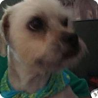 Adopt A Pet :: Xander - NON SHED - Phoenix, AZ
