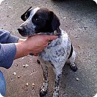 Adopt A Pet :: Martin - Allentown, PA