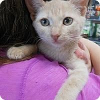 Adopt A Pet :: Rider - Reston, VA
