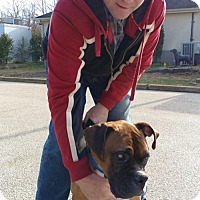 Adopt A Pet :: Chewy - Dumont, NJ