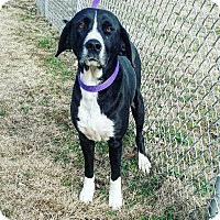 Adopt A Pet :: Zoey - Cannelton, IN