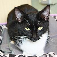 Adopt A Pet :: Squeak - Cottageville, WV