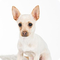 Adopt A Pet :: Arrow - St. Louis Park, MN