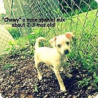 Adopt A Pet :: Chewy - Gadsden, AL