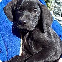 Adopt A Pet :: CAMRY - Glastonbury, CT