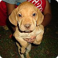 Adopt A Pet :: Wrinkles - P, ME