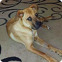 Adopt A Pet :: Jackson - Nashville, TN