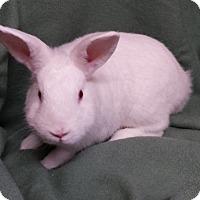 Adopt A Pet :: Lorenzo - Williston, FL