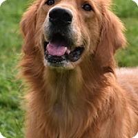 Adopt A Pet :: Benz - New Canaan, CT