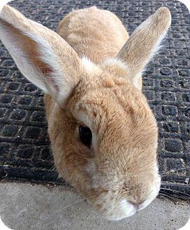 Dwarf Mix for adoption in Harbor City, California - Fuzzy