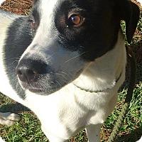Adopt A Pet :: Hampton - Courtesy Posting - New Canaan, CT