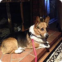 Adopt A Pet :: Rocky - Simi Valley, CA