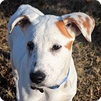 Adopt A Pet :: *Popeye - PENDING - Westport, CT