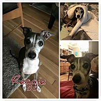 Adopt A Pet :: Reggie - Garden City, MI