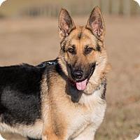 Adopt A Pet :: Zeke - Dacula, GA