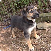 Adopt A Pet :: Ritz - Harrisonburg, VA