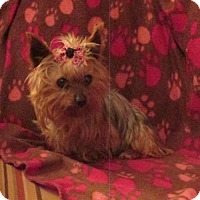 Adopt A Pet :: ANNIE - WOODSFIELD, OH
