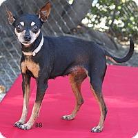 Adopt A Pet :: Greta - Santa Barbara, CA