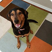 Adopt A Pet :: Luna - Pittsburg, KS